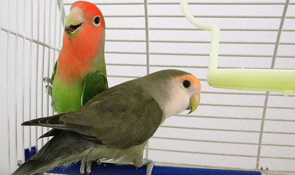 Avian Services in Fremont, CA