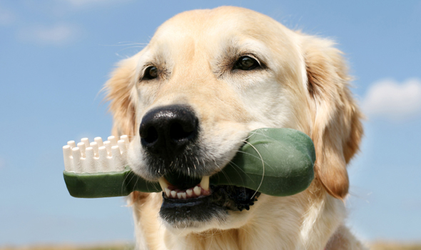 Pet Dental Care in Fremont, CA - Mission Valley Veterinary Clinic