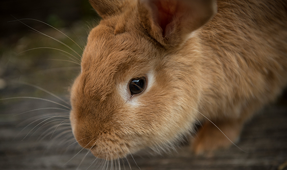 Rabbit & Small Mammal Care - Mission Valley Veterinary Clinic