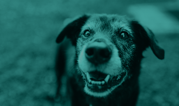 Senior Pet Wellness in Fremont, CA - Mission Valley Veterinary Clinic