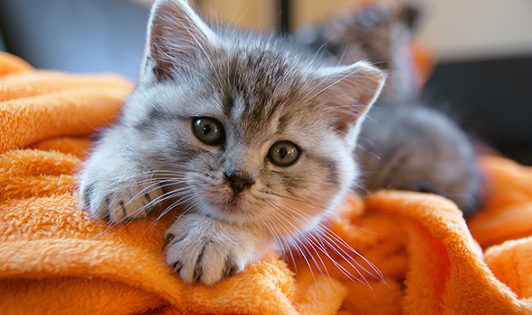 Pet Wellness Care in Fremont, CA - Mission Valley Veterinary Clinic